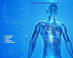 human skeleton 300x240 - human skeleton